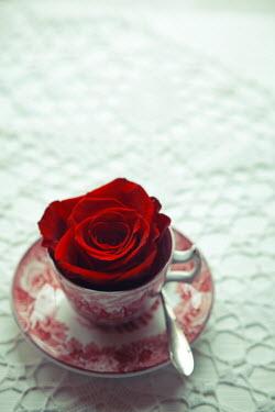 Ildiko Neer RED ROSE IN VINTAGE CHINA TEACUP Flowers