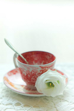 Ildiko Neer WHITE FLOWER ON VINTAGE CHINA TEACUP Miscellaneous Objects