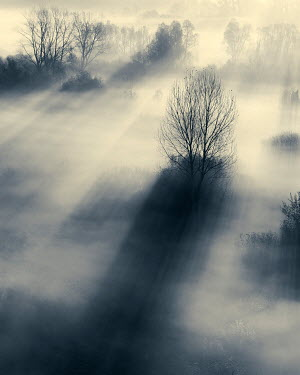 David Keochkerian SILHOUETTE OF TREES IN MORNING MIST Trees/Forest