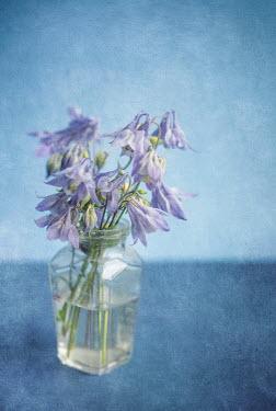 Jill Ferry PRETTY MAUVE FLOWERS IN GLASS VASE Flowers