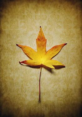 Lyn Randle YELLOW AUTUMN LEAF Flowers/Plants