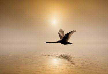 Adrian Leslie Campfield BIRD FLYING OVER WATER Birds