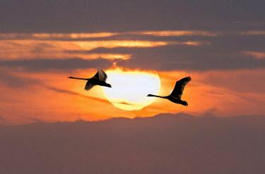 Adrian Leslie Campfield SONY DSC Birds