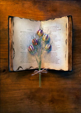 Paul Knight DRIED ROUND FLOWERS ON OPEN BURNT BOOK Flowers