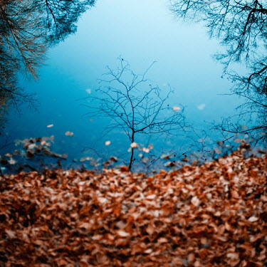 Esmahan Ozkan BARE AUTUMN TREES REFLECTED IN LAKE Trees/Forest