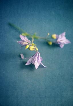 Jill Ferry LITTLE MAUVE WILD FLOWERS Flowers