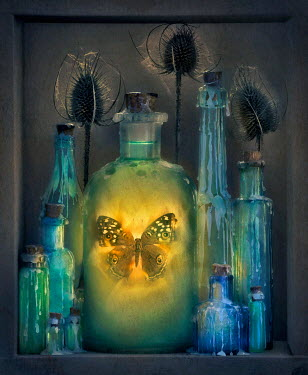 Paul Knight BUTTERFLY IN WAX SEALED BOTTLE Insects