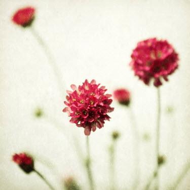 Manuela Deigert PRETTY RED FLOWERS Flowers/Plants