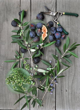 Ann Cutting FIG PLANTS AND GARDEN SHEARS Miscellaneous Objects