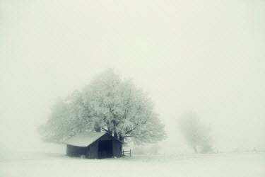 Carmen Spitznagel BARN AND TREE IN SNOWY FIELD Miscellaneous Buildings