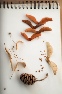 Sally Mundy AUTUMN DRIED LEAVES AND PINE CONE Flowers/Plants
