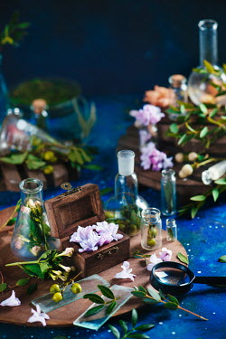 Dina Belenko FLOWERS AMD LEAVES IN GLASS BOTTLES Flowers