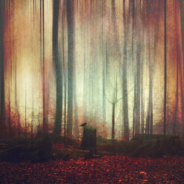 Dirk Wustenhagen BIRD ON TREE STUMP IN AUTUMN FOREST Trees/Forest