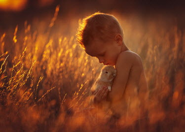 Lisa Holloway LITTLE BOY WITH BUNNY IN FIELD AT SUNSET Children