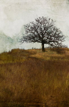 Jamie Heiden LADDER NEXT TO TREE IN COUNTRYSIDE Trees/Forest