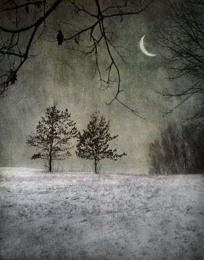 Jamie Heiden TREES IN SNOWY COUNTRYSIDE AT NIGHT Trees/Forest