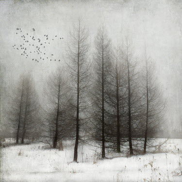 Jamie Heiden BIRDS FLYING OVER SNOWY WOODS Trees/Forest