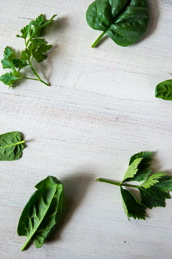 Maria Petkova GREEN HERB LEAVES Miscellaneous Objects