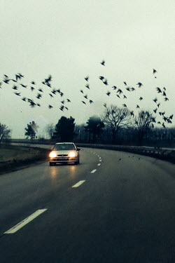 Maria Petkova BIRDS FLYING OVER CAR ON COUNTRY ROAD Cars