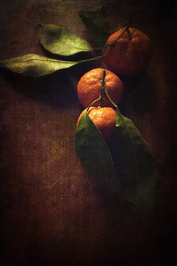Dawn Hanna CLEMENTINES LYING ON TABLE Miscellaneous Objects