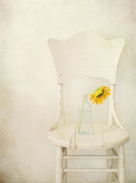 Pamela Schmieder SUNFLOWER IN GLASS BOTTLE ON CHAIR Flowers