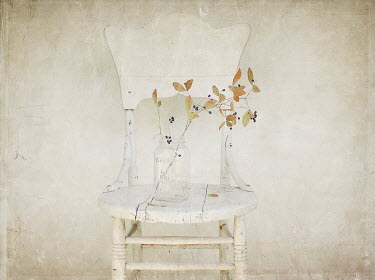 Pamela Schmieder BERRY PLANT IN GLASS JAR ON CHAIR Flowers
