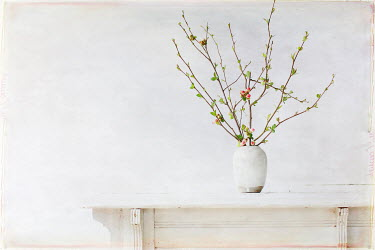 Pamela Schmieder FLOWERS IN VASE ON TABLE Flowers