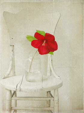 Pamela Schmieder RED FLOWER IN JAR ON CHAIR Flowers