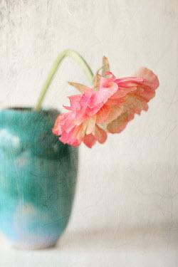 Pamela Schmieder PINK DALIA IN TURQUOISE VASE Flowers
