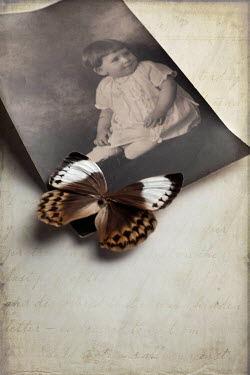 Jude McConkey BUTTERFLY ON VINTAGE PHOTO OF TODDLER Miscellaneous Objects