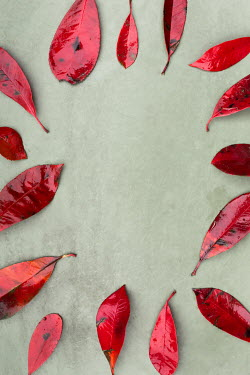 Paolo Martinez CIRCLE OF RED LEAVES Flowers