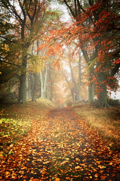 Iain Sarjeant COUNTRY PATH WITH AUTUMN TREES Paths/Tracks