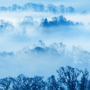 Iain Sarjeant TREETOPS WITH MIST AT DUSK Trees/Forest