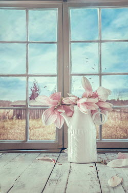 Drunaa Magnolia flowers on window sill Interiors/Rooms