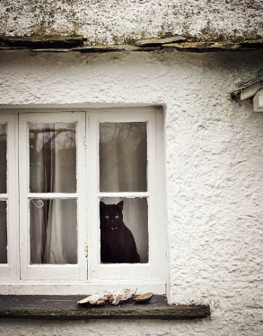 Vesna Armstrong BLACK CAT LOOKING OUT COTTAGE WINDOW Animals