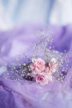 Jill Ferry PINK ROSE FLOWERS ON PURPLE FABRIC Flowers