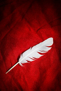 CollaborationJS white feather on red fabric Miscellaneous Objects
