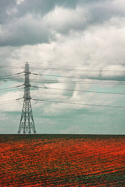 Evelina Kremsdorf TELEPHONE PYLON TOWER IN RED FIELD Fields