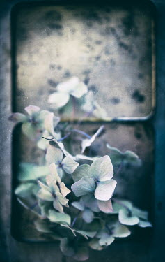 Jill Ferry WHITE FLOWERS GROWING ON SHABBY WALL Flowers/Plants