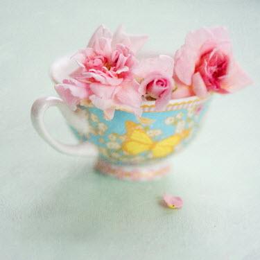 Jill Ferry PINK FLOWERS INSIDE CHINA TEA CUP Flowers