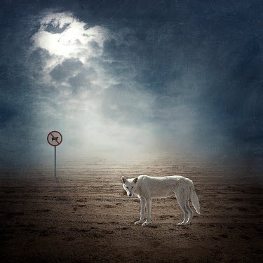 Alessandra Favetto WHITE WOLF UNDER CLOUDY SKY Animals