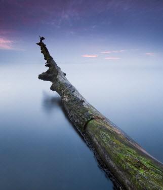 Leszek Paradowski FALLEN TREE IN CALM LAKE WATER Trees/Forest
