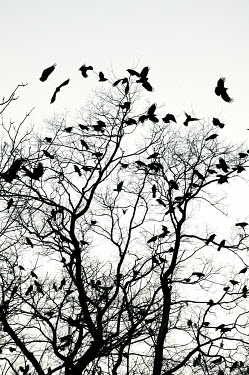 Ute Klaphake SILHOUETTE OF BIRDS ON TREE BRANCHES Birds