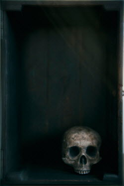 Lee Avison human skull in a wooden box Miscellaneous Objects