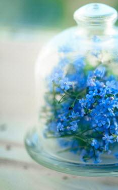 Franci van der Vyver BLUE FLOWERS UNDER GLASS BELL JAR Flowers