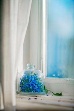 Franci van der Vyver BLUE FLOWERS IN GLASS JAR ON WINDOWSILL Flowers