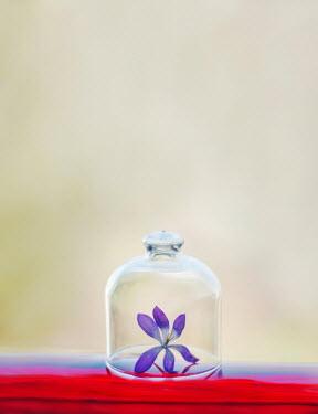 Franci van der Vyver PURPLE FLOWER UNDER GLASS BELL JAR Flowers