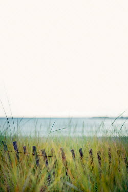 Franci van der Vyver FENCING ACROSS GRASS BY WINTRY SEA Seascapes/Beaches
