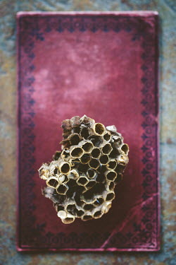Susan O'Connor WASPS NEST LYING ON RED BOOK Miscellaneous Objects