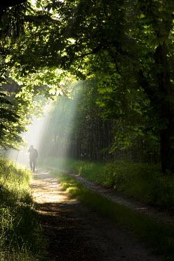Leszek Paradowski MAN WALKING THROUGH SUNLIT WOODS Men